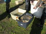 Výlov rybníku